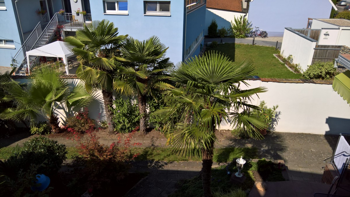 Palmenbilder aus 2016…